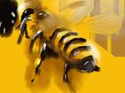 votre apiculteur à la Réunion 974 | Le Rucher d'Autre Foies