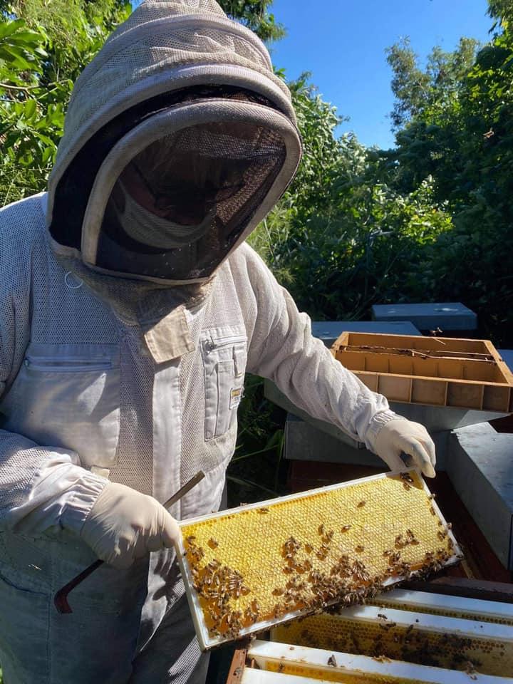 le rucher d'autre foies